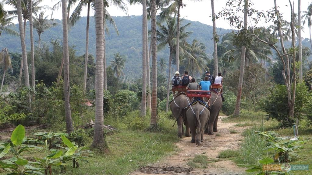 elephant-trekking-samui-1