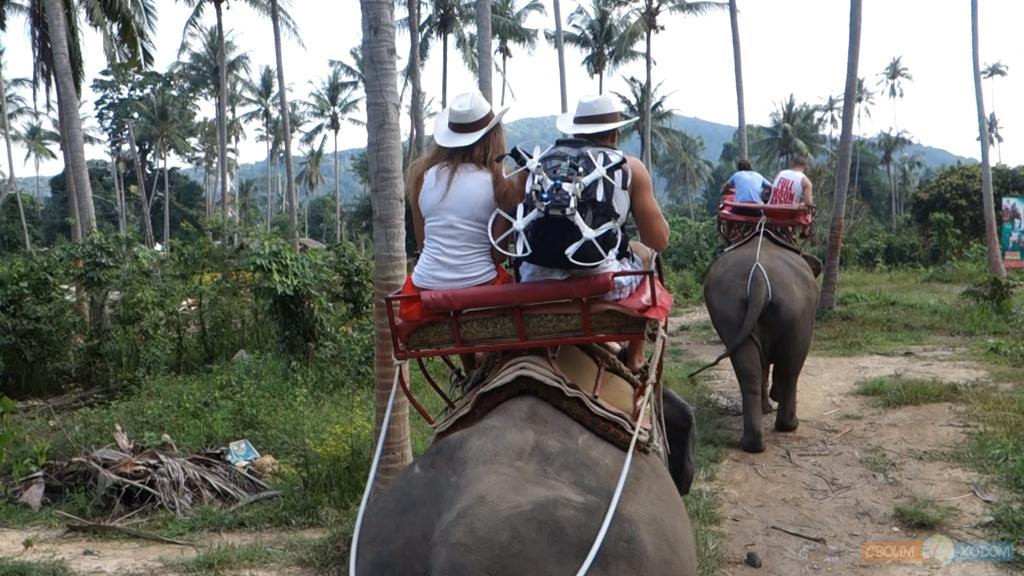 elephant-trekking-samui-2