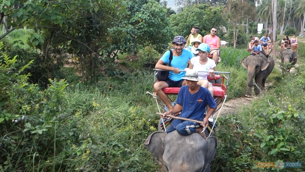 elephant-trekking-samui-3