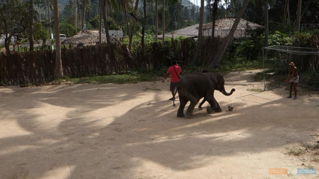 elephant-trekking-samui-6