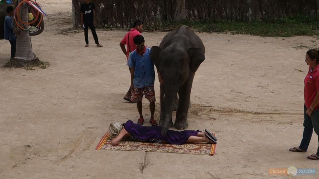 elephant-trekking-samui-7