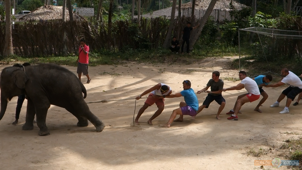 elephant-trekking-samui-8